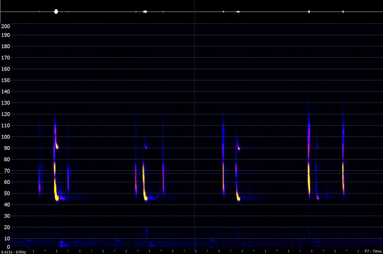 Mixed-bats-sound-analysis-A-Hall